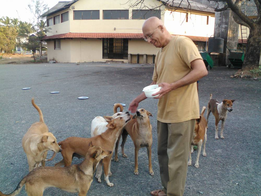 Bannu feeds the neighbourhood dogs